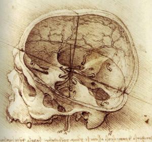 Skull studies from Leonardo Da Vinci's notebooks